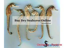 DRY SEAHORSE SHRIMPS CRABS LOBSTERS AND SEAFOOD FOR SALE