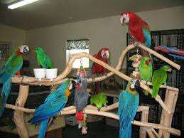Parrots available . (DNA tested). ( +18329058156  )