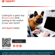Pet Video Data Collection for English Speakers in Slovakia